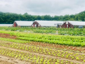 Chipman Farms fields of small plants with three large red greenhouses